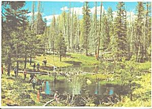 White Mountains  AZ Beaver Dams cs9042 (Image1)