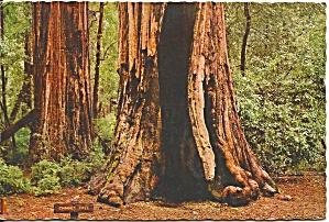Big Basin Redwoods State Park California cs9072 (Image1)