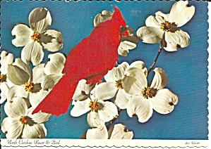 North Carolina State Bird The Cardinal cs9200 (Image1)