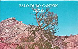 Palo Duro Canyon Texas Cedar Brush cs9637 (Image1)