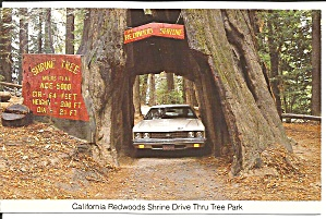Myers Flat Ca Historic Drive Thru Shrine Tree Cs9643