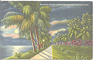 Florida Tropical Moolight Trail Postcard cs9665 (Image1)
