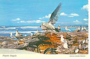 Majestic Seagulls Postcard (Image1)