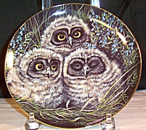 Short Eared Owls By Dick Twinney,baby Owls Collection