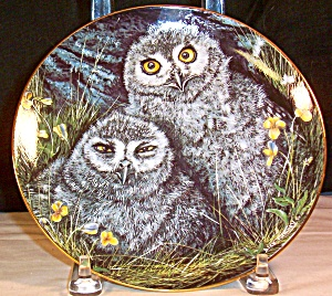 Snowy Owls By Dick Twinney,baby Owls Collection