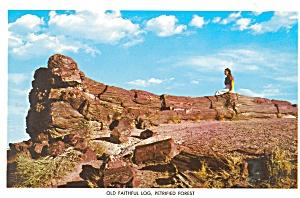 Petrified Forest AZ  Old Faithful Log Postcard lp0023 (Image1)