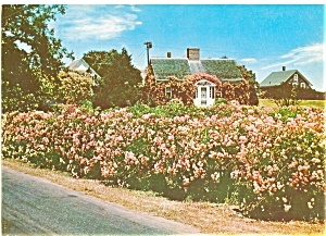 Rose Cottage On Cape Cod Ma Postcard Lp0044