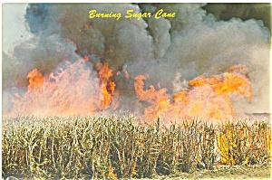 Florida Burning Sugar Cane Postcard lp0100 (Image1)