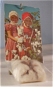 Novelty Postcard Boll of Cotton (Image1)