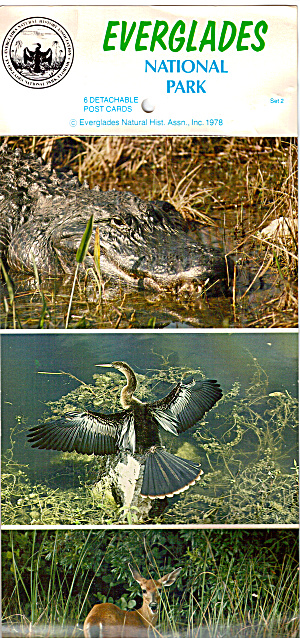 Lot Of Six Cards Of Birds And Animals Of The Everglades Lp0404