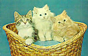Three Kittens In A Basket Large Postcard Lp0498