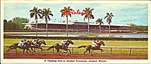 Hialeah Racecourse Hialeah Florida lp0601 (Image1)