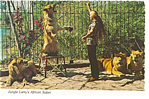 Pat White with Her African Lions Postcard n0640 (Image1)