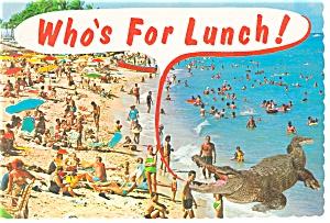 Florida Beach and Alligator  Postcard n0828 (Image1)