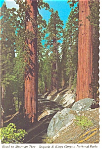Redwoods Road to Sherman Tree Kings Canyon National Park CA Postcard n0895 (Image1)
