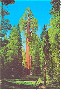 General Grant Sequoia Tree Kings Canyon National Park CA Postcard n0900 (Image1)