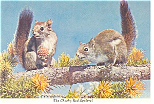 Cheeky Red Squirrels Postcard n0910 (Image1)