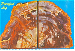 Petrified Log Bookends Postcard