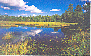 Boundary Waters Canoe Area Wilderness Postcard
