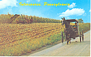 Amish Buggy, Intercourse, PA Postcard (Image1)