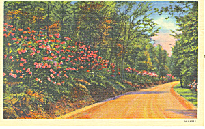 Mountain Laurel Time Valley Forge PA Postcard n1143 (Image1)