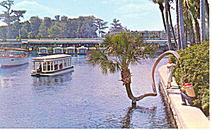 Lucky Palm, Silver Springs, Florida Postcard (Image1)