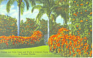 Orange and Palm Trees Tropical Florida  Postcard n1161 (Image1)