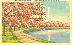 Washington Monument Cherry Blossom Time Postcard (Image1)
