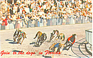 Greyhound Racing in Florida Postcard (Image1)