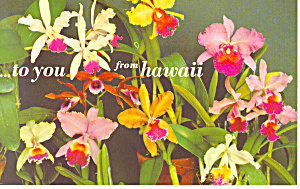 Nine Examples of Orchids Hawaii Postcard n1220 (Image1)