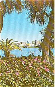 Mirror Lake St Petersburg FL  Postcard p0291 (Image1)
