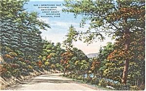 Newfoundland Gap Highway  NC Postcard p0463 (Image1)