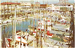 Fishing Fleet  San Francisco CA Postcard p0800 (Image1)