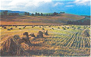 Fields of Grain Morrisville PA Postcard p1016 (Image1)