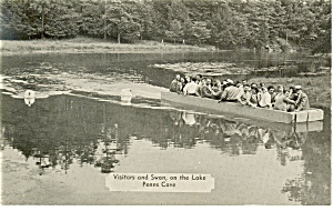 Swans On Lake At Penn S Cave Pa Postcard P10175