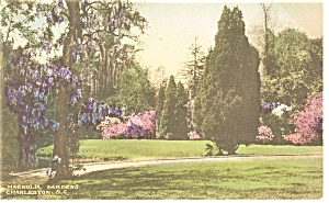 Charleston Sc View Magnolia Gardens Hand Colored Pcard P10271