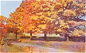 Magnificent Autumn Road Scene Postcard P1031