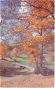 Tints Of Autumn Road Scene Postcard P1033