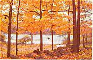 Autumn Woodlands and Lake Scene Postcard p1038 (Image1)