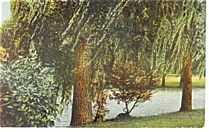 Trees And Lake Private Mailing Card