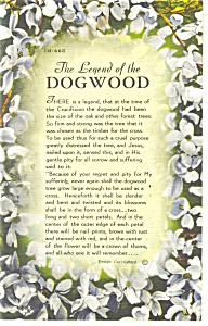 Legend Of The Dogwood Postcard p10498 1967 (Image1)