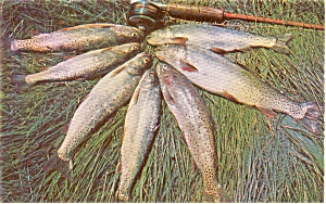 Large Fish Catch Morrisvllie Pa Postcard P1064