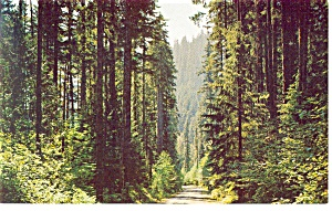 Pacific Northwest Fir Lined Highways Postcard P10943
