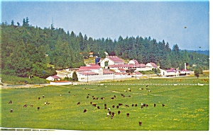 Carnation Milk Farms Washington Postcard p10946 (Image1)