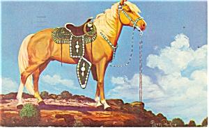 Palomino Stallion Postcard 1953 (Image1)