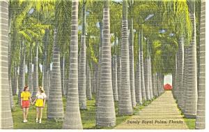 Florida Stately Royal Palms Linen Postcard p11151 (Image1)