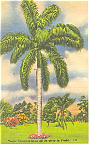 Palm Tree and Flowers in Florida Postcard p11263 (Image1)