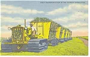 Field Transportation in Florida Everglades Postcard p11264 (Image1)