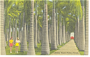 Stately Royal Palms Florida Postcard p11280 (Image1)