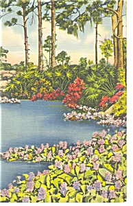 Hyacinth Pool Florida Postcard p11284 1946 (Image1)